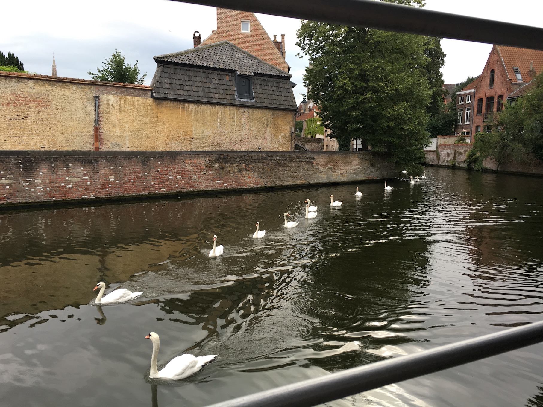 Swanning around Bruges